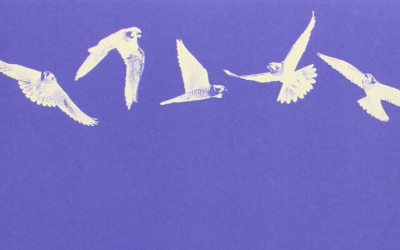 Is This The Best Book Ever Written About A Bird?