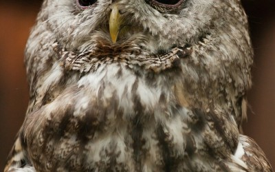 Why Do Owls Hunt At Night?